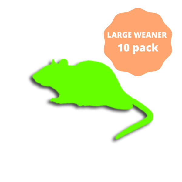 Large Weaner Frozen Rats 10 pack